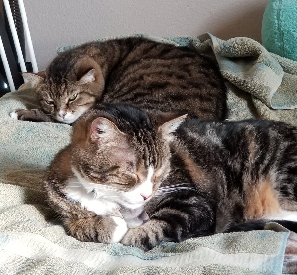 Two tabby cats taking a nap.