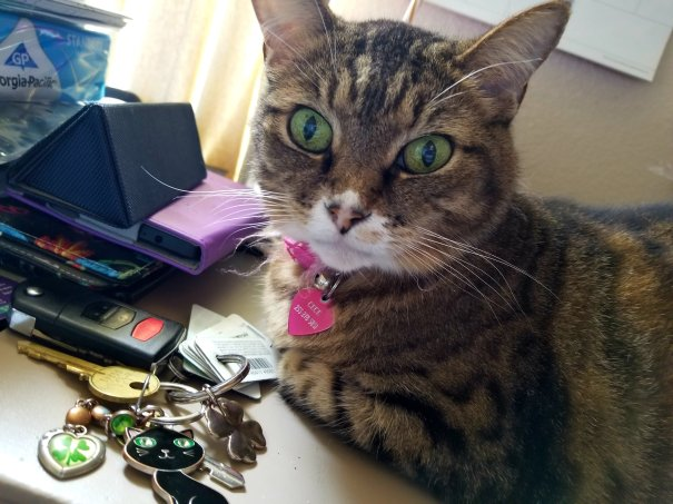 Photo of a brown tabby cat sitting next to car keys.